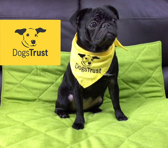 DOGS TRUST BED